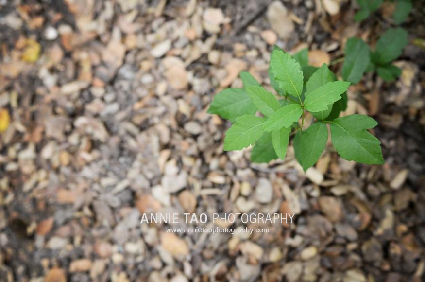 Palo-Alto-lifestyle-family-photography-poison-ivy