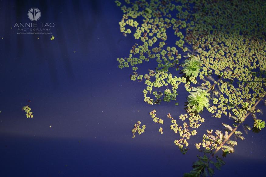 Bay-Area-lifestyle-photography-stuff-floating-on-pond