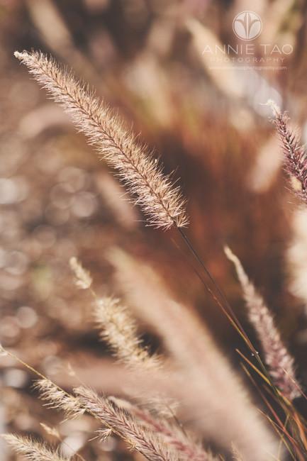 Bay-Area-lifestyle-photography-closeup-fuzzy-plant-thingie