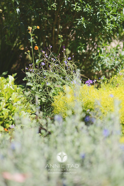 Bay-Area-lifestyle-photography-wild-flowers