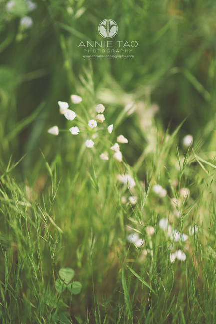 East-Bay-lifestyle-photography-tiny-white-wildflowers-among-long-grass