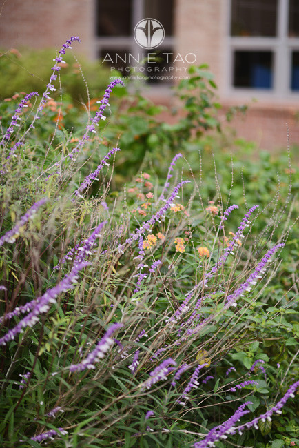 Commercial-photography-flowers-in-campus-garden