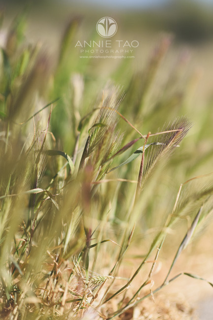 East-Bay-lifestyle-photography-wild-grass-closeup