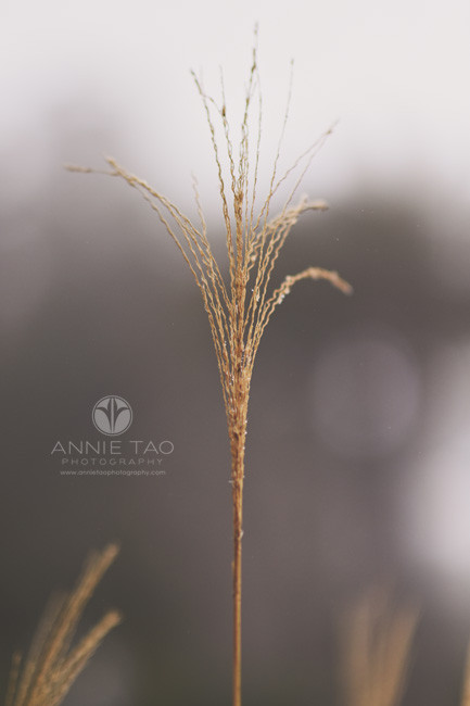 San-Francisco-lifestyle-photography-golden-rod-wheat-looking-thing-closeup