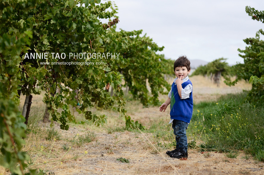 San-Francisco-East-Bay-family-photography-toddler-boy-standing-in-vineyard