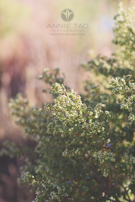 Bay-Area-lifestyle-photography-closeup-of-bush-by-lake