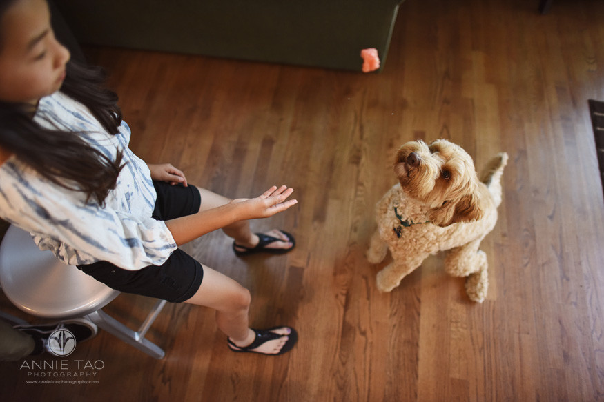 San-Francisco-Bay-Area-lifestyle-family-photography-girl-tossing-treat-to-dog-jumping