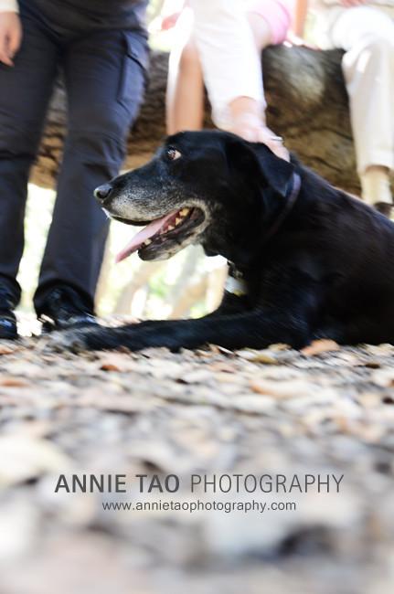 Palo-Alto-lifestyle-family-photography-petting-the-dog
