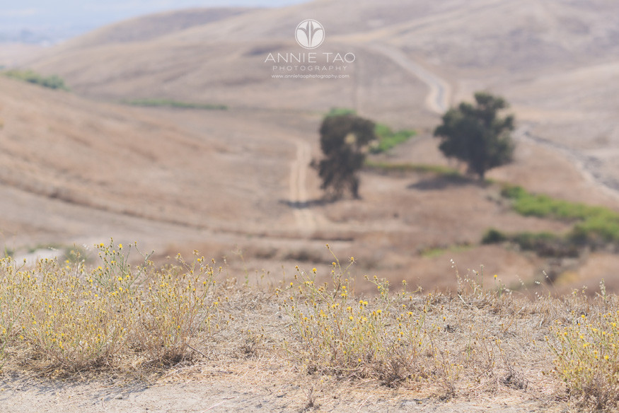 East-Bay-lifestyle-photography-dry-valley