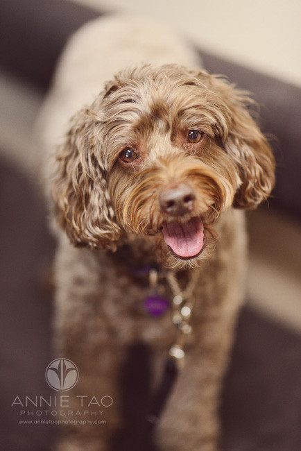 East-Bay-Commercial-Photography-San-Ramon-Bishop-Ranch-Veterinary-brown-dog