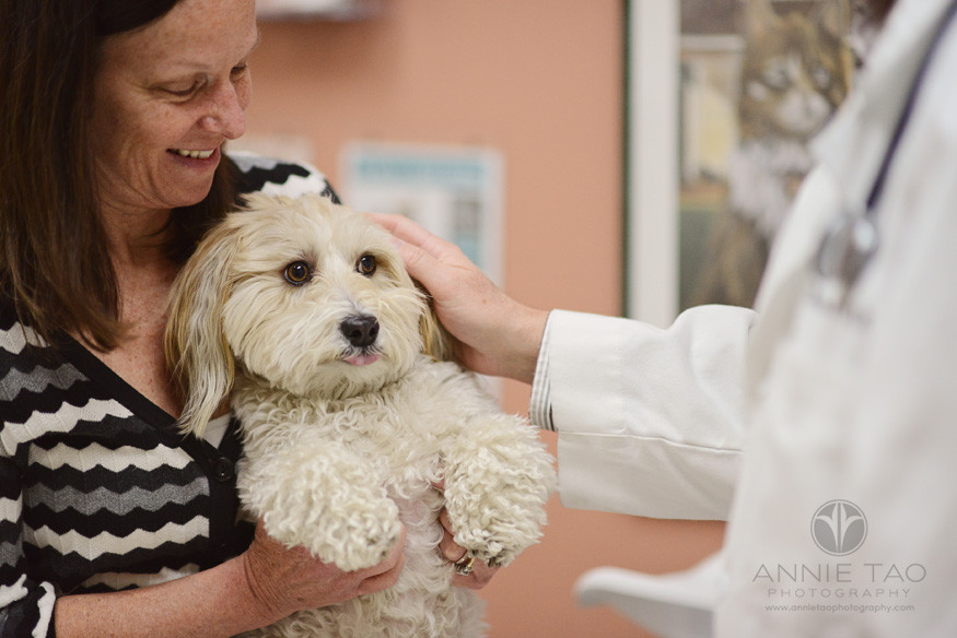 East-Bay-Commercial-Photography-San-Ramon-Bishop-Ranch-Veterinary-owner-holding-her-dog-while-vet-pets-him