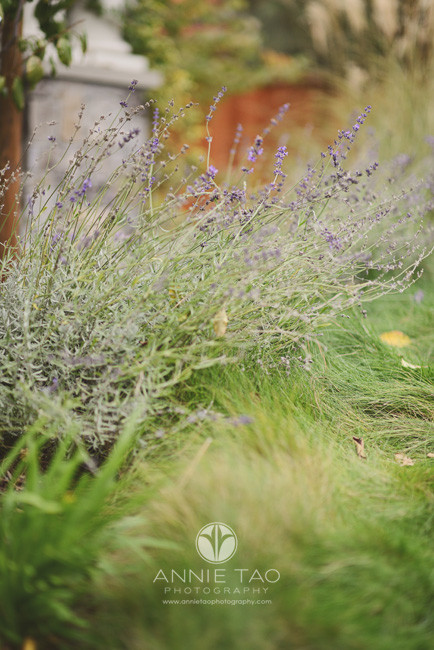 Bay-Area-Palo-Alto-lifestyle-photography-garden-at-home