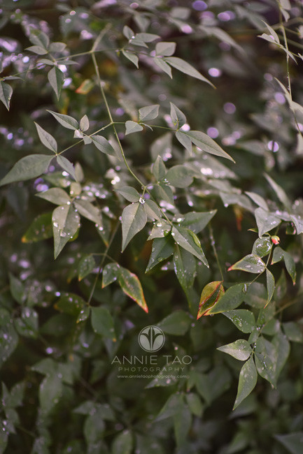 Bay-Area-lifestyle-photography-dark-green-leaves-with-glistening-beads-of-water