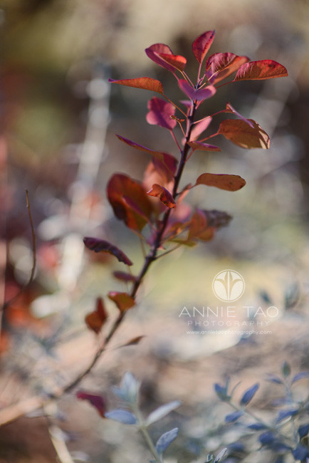 East-Bay-lifestyle-photography-branch-with-maroon-leaves