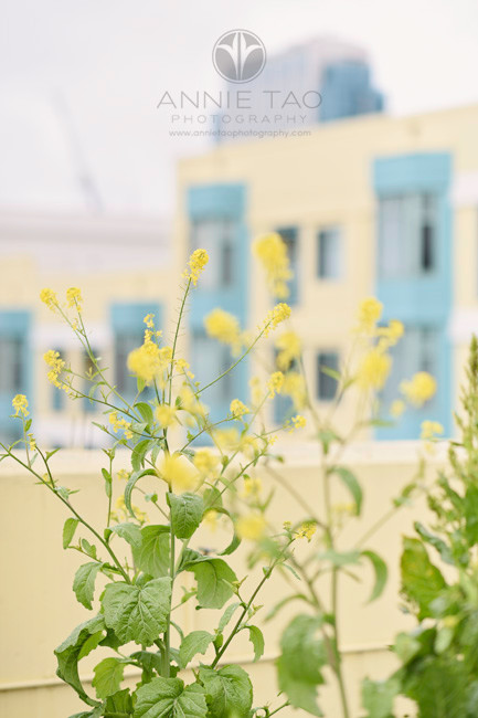 San-Francisco-commercial-photography-senior-housing-flowers-on-rooftop-3