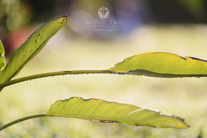 san-francisco-lifestyle-photography-diamond-droplets-on-leaf