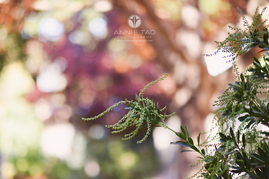 Bay-Area-lifestyle-photography-colors-of-nature-in-the-fall