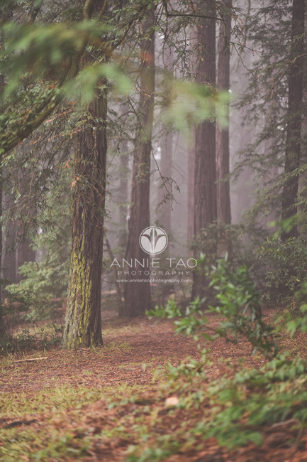 East-Bay-lifestyle-photography-forest-in-the-fog