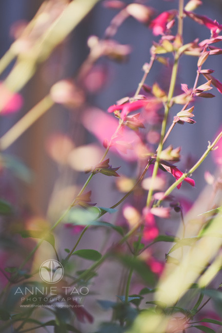 Bay-Area-lifestyle-photography-pink-flowering-plant-in-garden