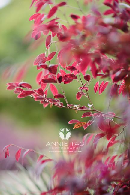 san-francisco-lifestyle-photography-red-foliage