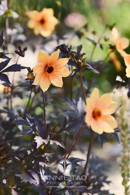 Bay-Area-lifestyle-photography-orange-flowers