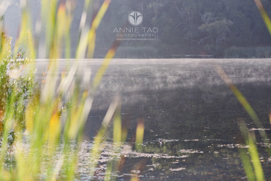 Bay-Area-lifestyle-photography-morning-fog-rolling-across-lake