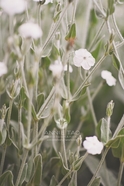 Bay-Area-lifestyle-photography-teeny-tiny-white-flowers