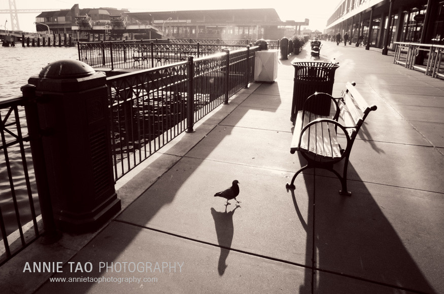 San-Francisco-family-photography-Ferry-Building-Mister-Pigeon