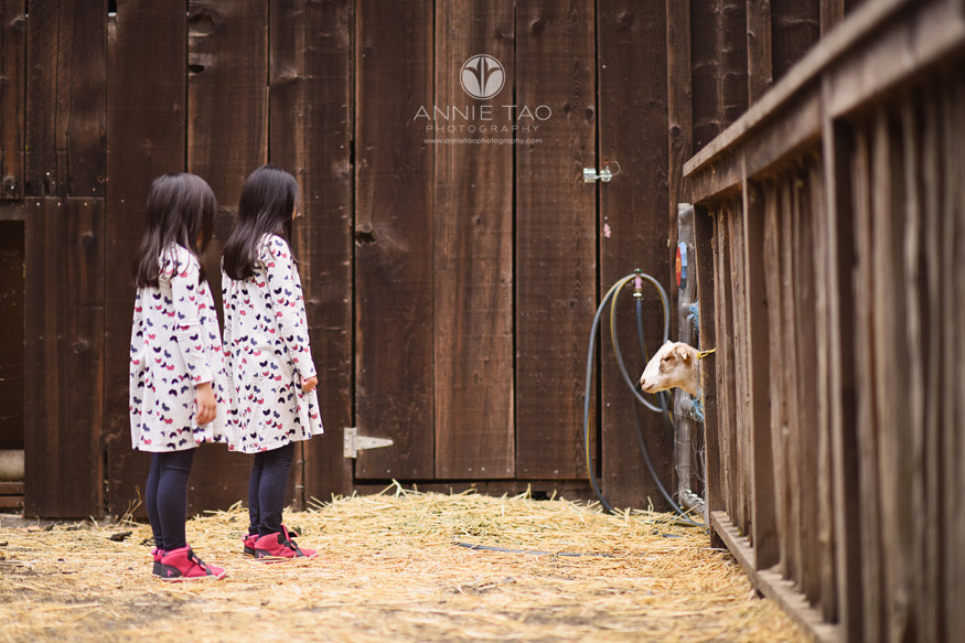 Bay-Area-lifestyle-children-photography-girls-watching-goat-sticking-its-head-out-from-fence