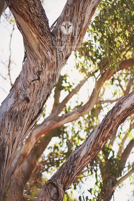 South-Bay-lifestyle-photography-bark-of-eucalyptus-tree