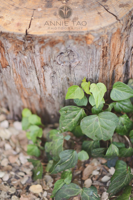 East-Bay-lifestyle-photography-stump-and-vines