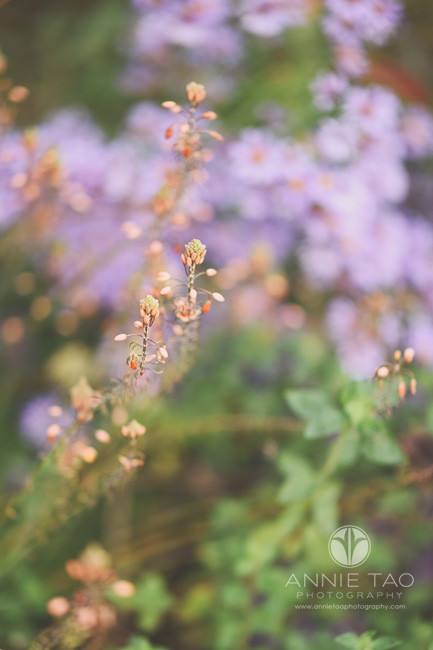 San-Francisco-lifestyle-photography-flowers-in-garden