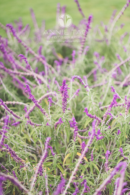 San-Francisco-lifestyle-photography-purple-long-flowers-in-the-city