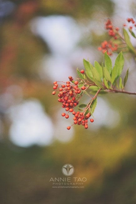 Los-Altos-lifestyle-photography-red-berries