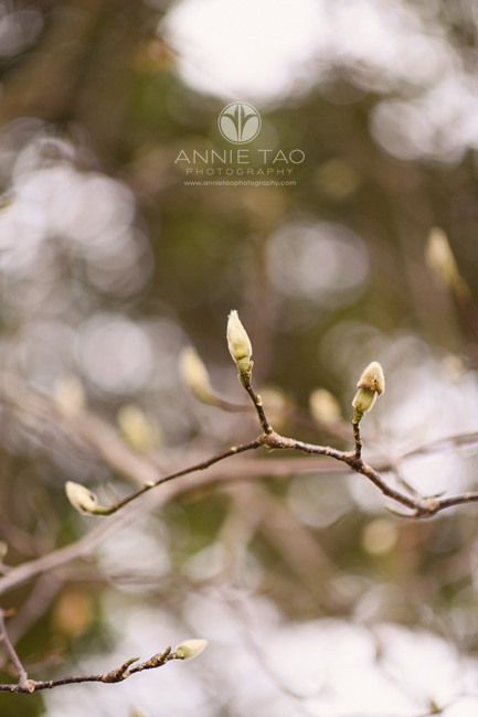 Bay-Area-lifestyle-photography-flower-buds-in-the-garden