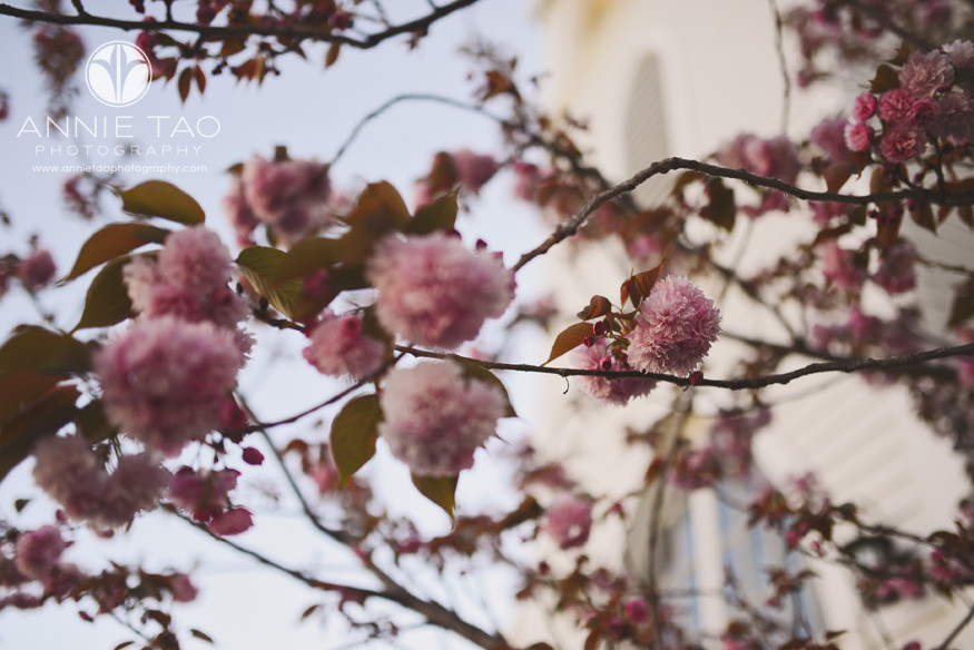 East-Bay-photography-flowering-tree