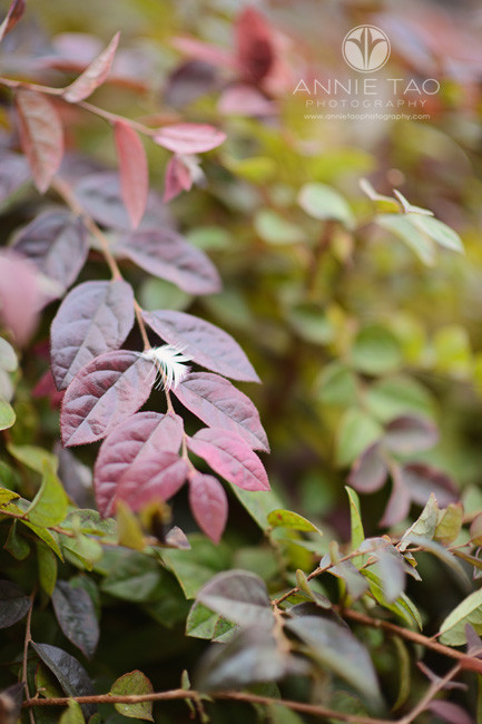 san-francisco-lifestyle-photography-leaves-of-color-with-one-feather