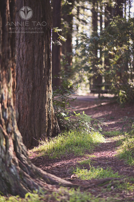 east-bay-lifestyle-photography-path-in-woods