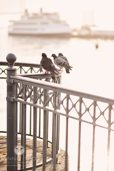 San-Francisco-lifestyle-photography-pigeons-sitting-on-pier