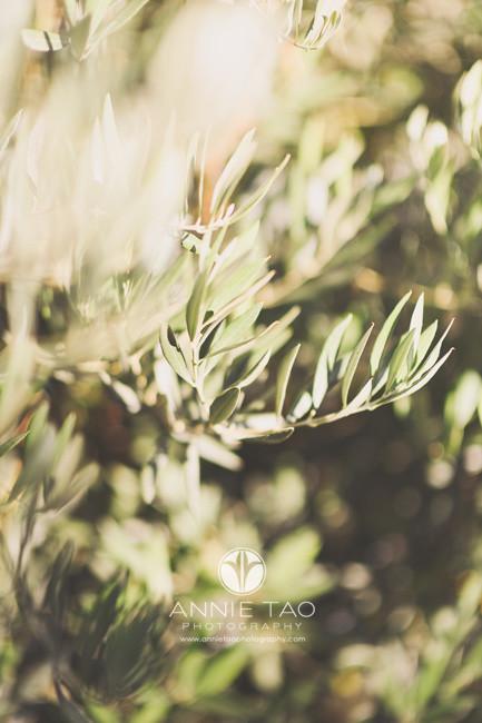 East-Bay-photography-green-bush
