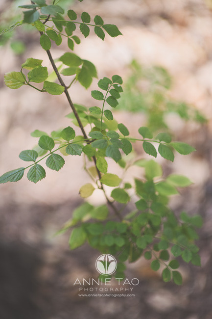 Bay-Area-lifestyle-photography-green-leaf-branch