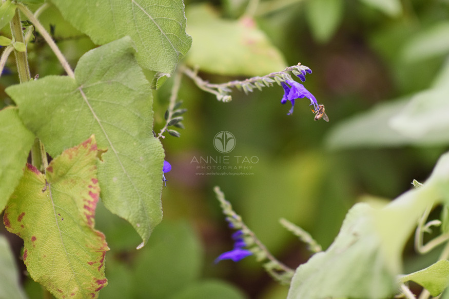 Bay-Area-lifestyle-photography-bee-in-the-garden