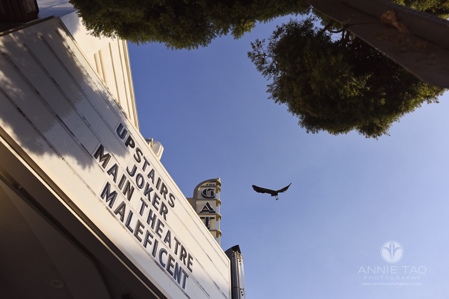 San-Francisco-Bay-Area-Los-Gatos-lifestyle-photography-black-bird-flying-overhead-by-old-theater