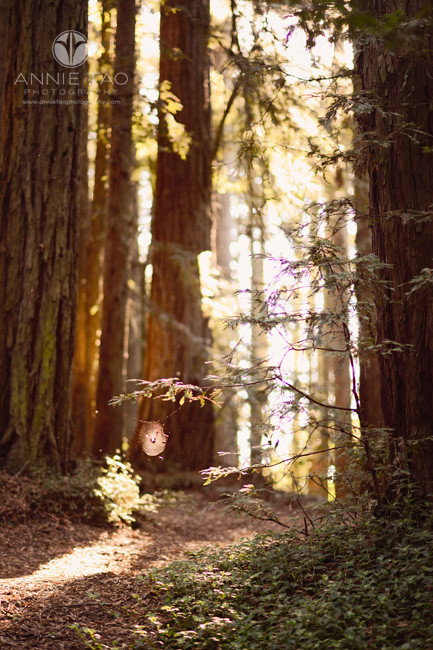 east-bay-lifestyle-photography-cobweb-in-redwood-forest