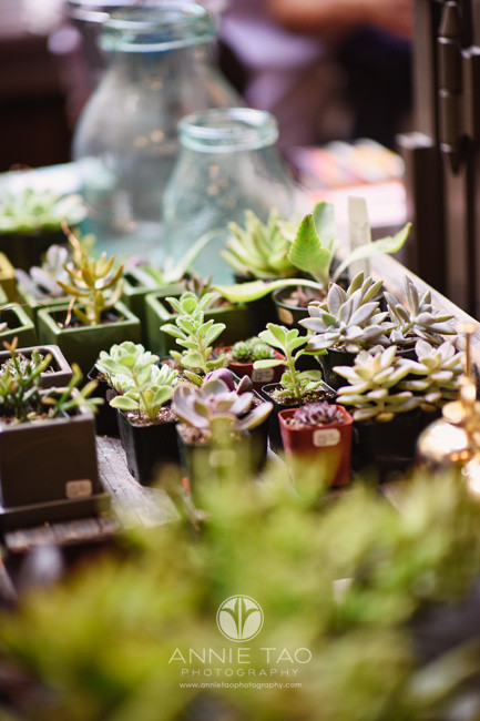 San-Francisco-lifestyle-photography-succulents-at-farmers-market