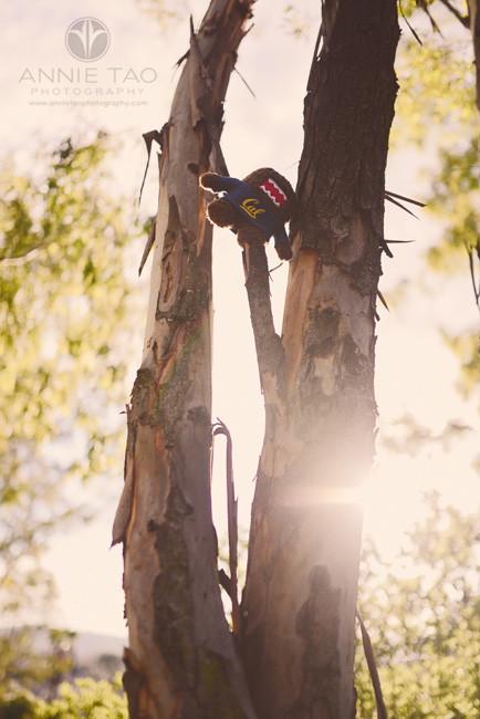 San-Francisco-Bay-Area-children-photography-domo-climbing-a-tree