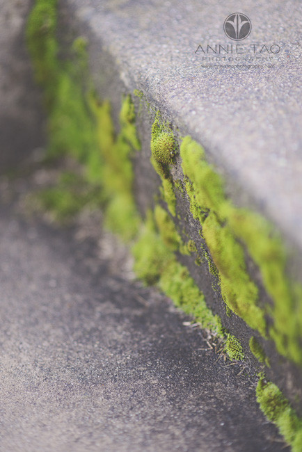 Bay-Area-styled-photography-moss-growing-on-stairs