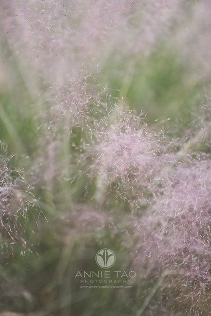 Bay-Area-lifestyle-photography-fuzzy-pink-bush-in-garden