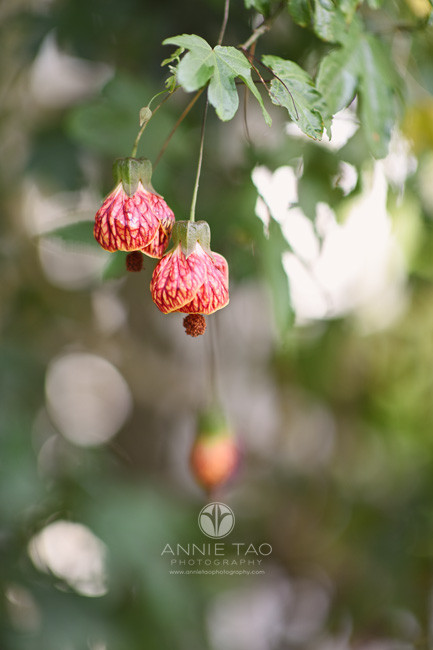 San-Francisco-Bay-Area-lifestyle-photography-drooping-red-flowers