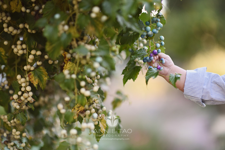 Bay-Area-lifestyle-baby-photography-baby-hand-touching-currants-on-vine
